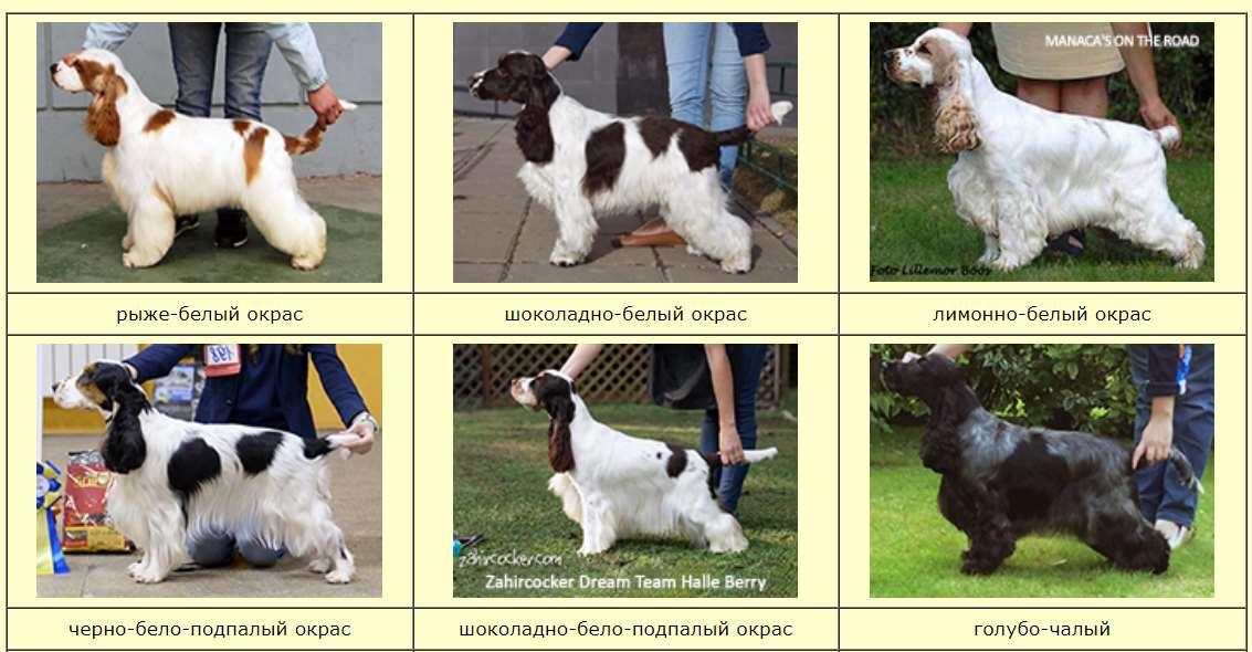 Самая умная порода собак в мире - Бордер-колли