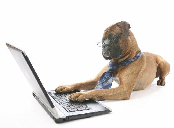Собачка за ноутбуком