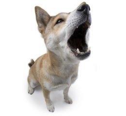 Обучаем собаку команде голос: руководство по самостоятельной дрессировке