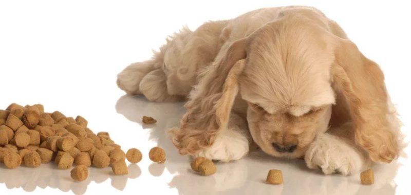 как понять, что у собаки гастрит
