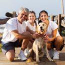 ТОП-15 - лучшие семейные породы собак