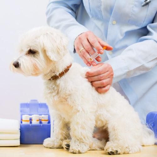 Прививки и таблица их проставления для щенков до года