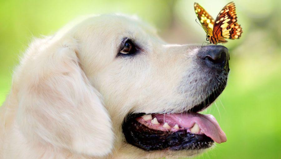 добрая порода собак