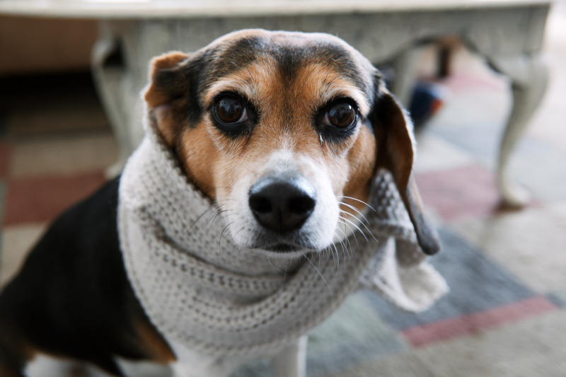 Как защитить собаку осенью