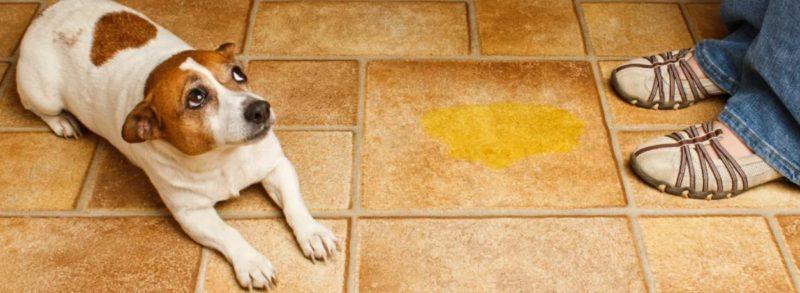 как отучить собаку ходить в туалет дома