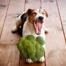 Диеты при ожирении и других заболеваниях собаки