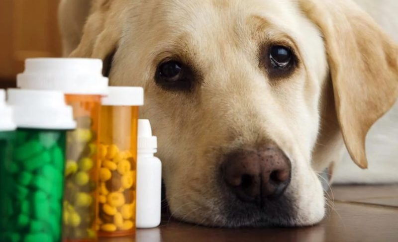 Чем лечить гастрит собаке