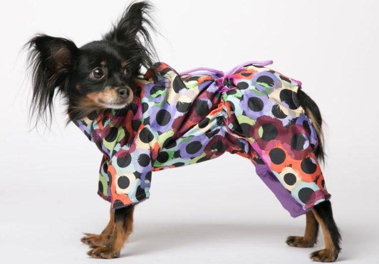 профилактика осенних болезний собаки