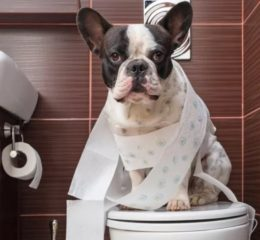 Что делать если собака гадит дома: советы и рекомендации специалиста