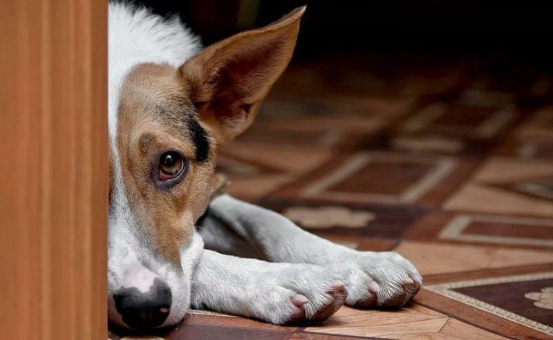 отучаем собаку гадить