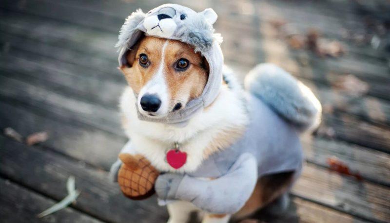 Капли ушные для собаки