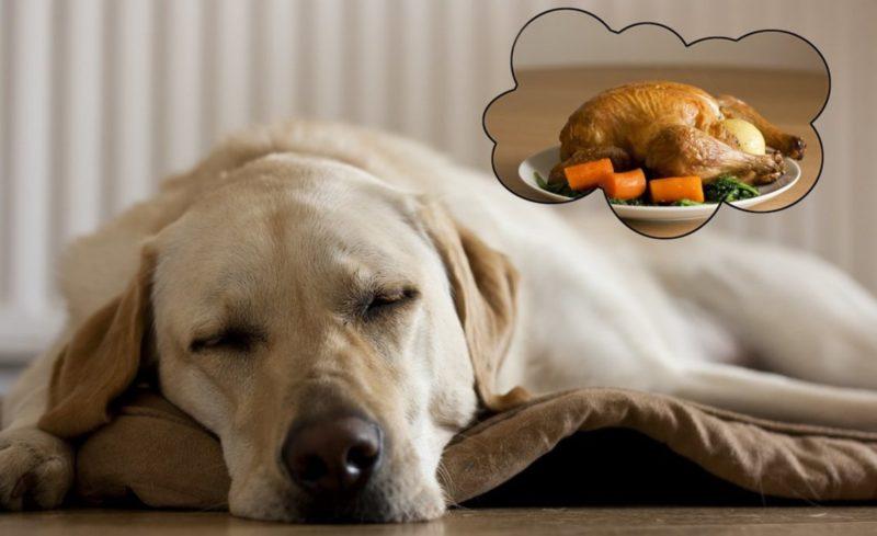 чем кормить толстую собаку