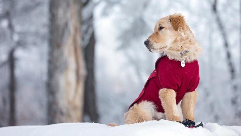 переохлаждение у собаки