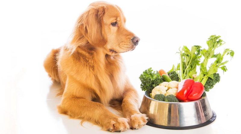 как перевести собаку на диетическое питание
