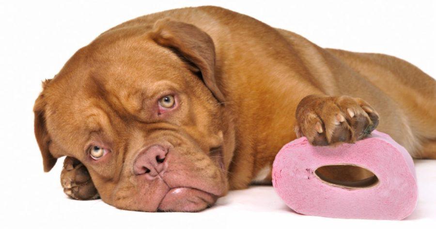 диарея у собаки