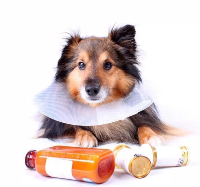фото - аллергия у собаки