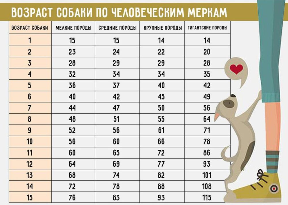 таблица соотношения возраста собаки и человека