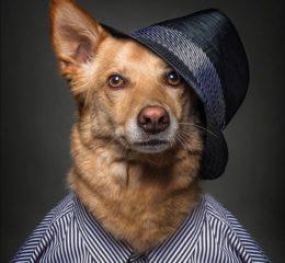 Все, что нужно знать о возрасте собаки