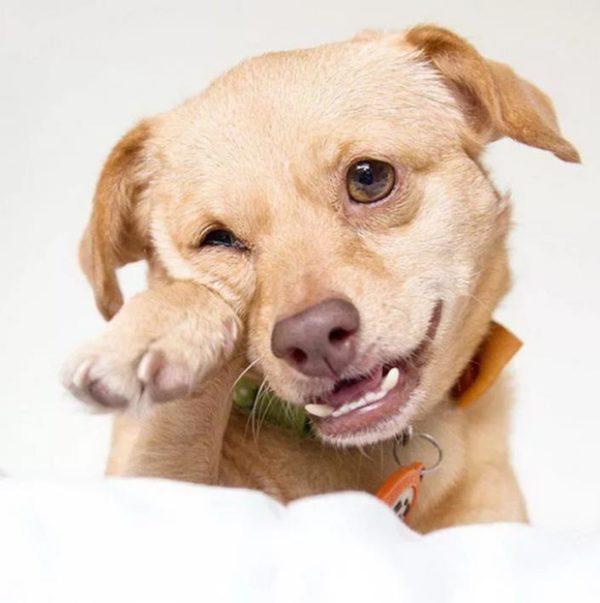 Атопический дерматит у собак причина