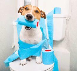 Причины и лечение диареи у собаки