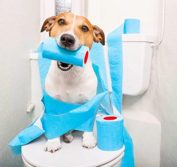 Что дать собаке от поноса из человеческих лекарств