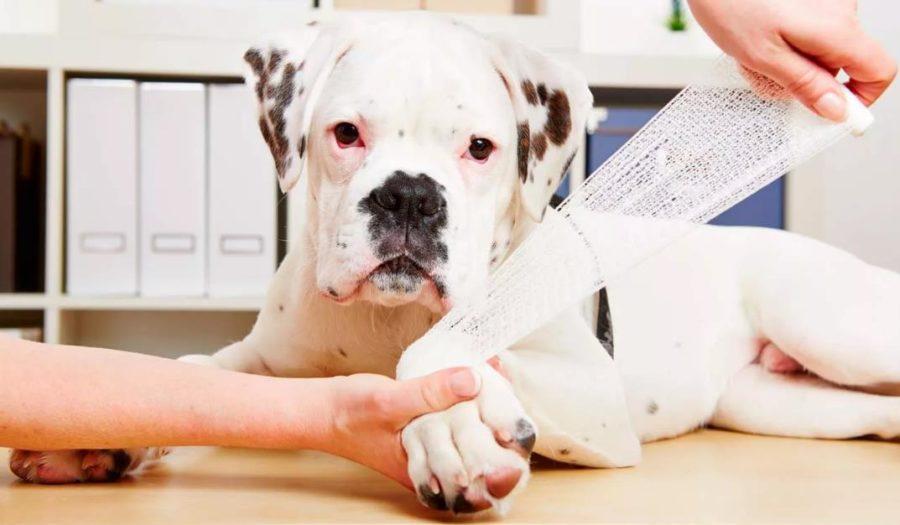 Лечение дерматита у собак