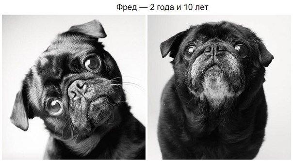 Внешность старой собаки
