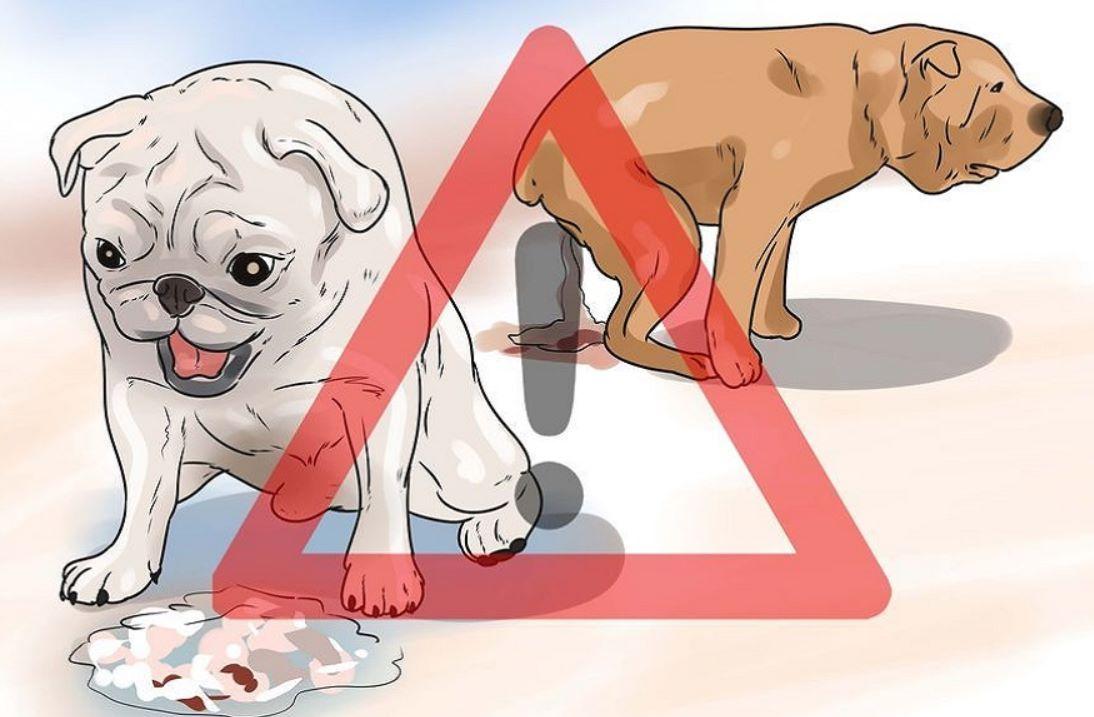 рвота и понос у собаки