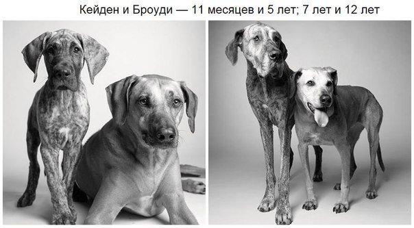 как понять что собака постарела