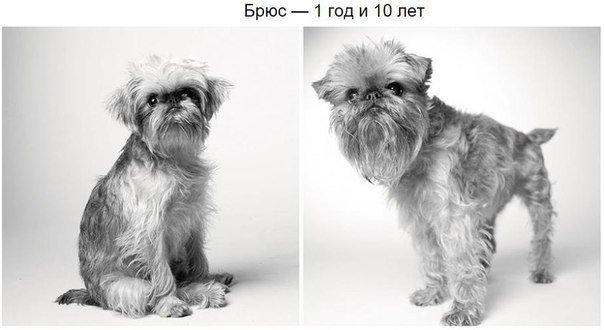 фото старой собаки