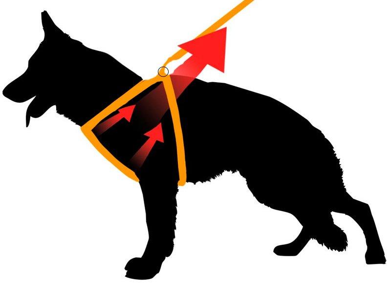 шлейка для собаки своими руками