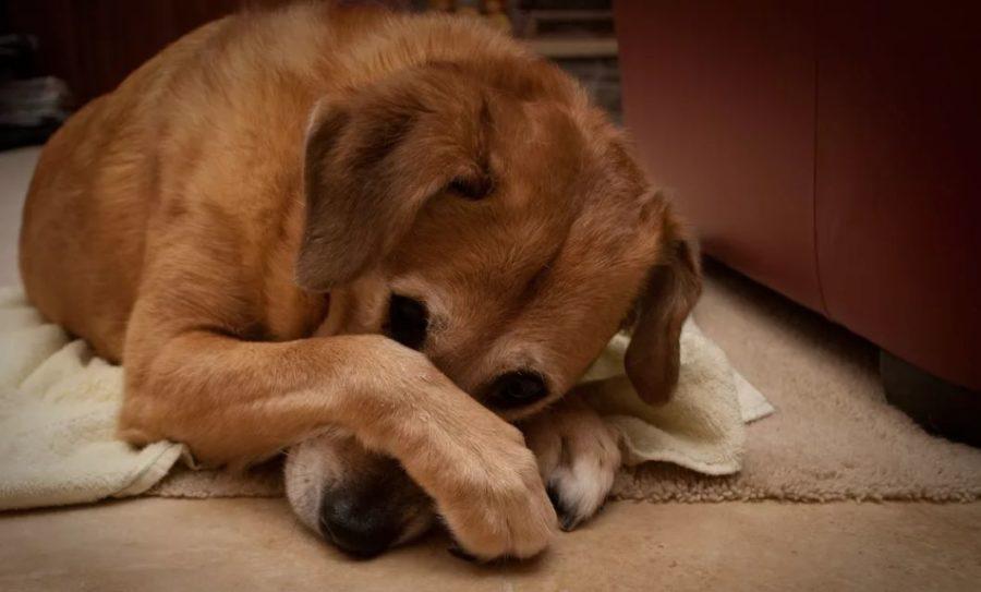 что делать при поносе собаки