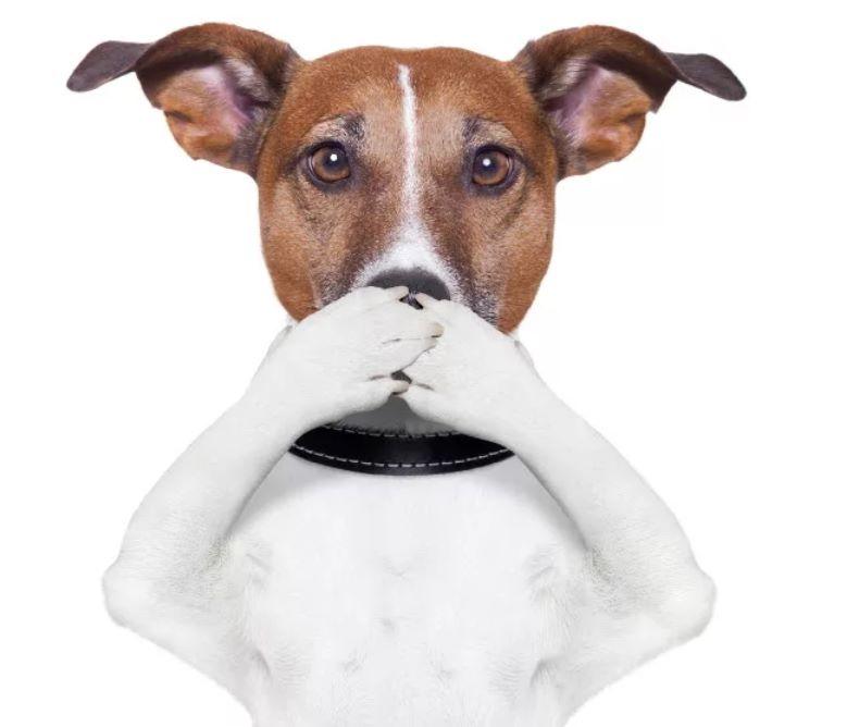 список препаратов при поносе у собаки