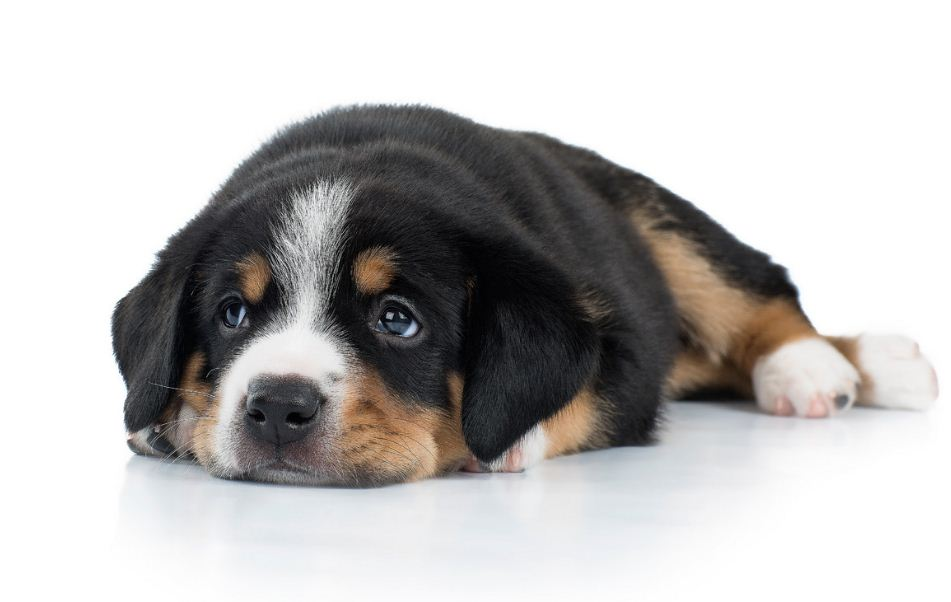Фотография щенка
