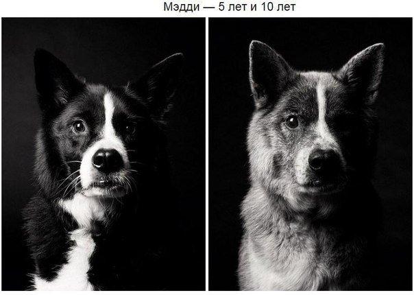 как собака меняется в старости