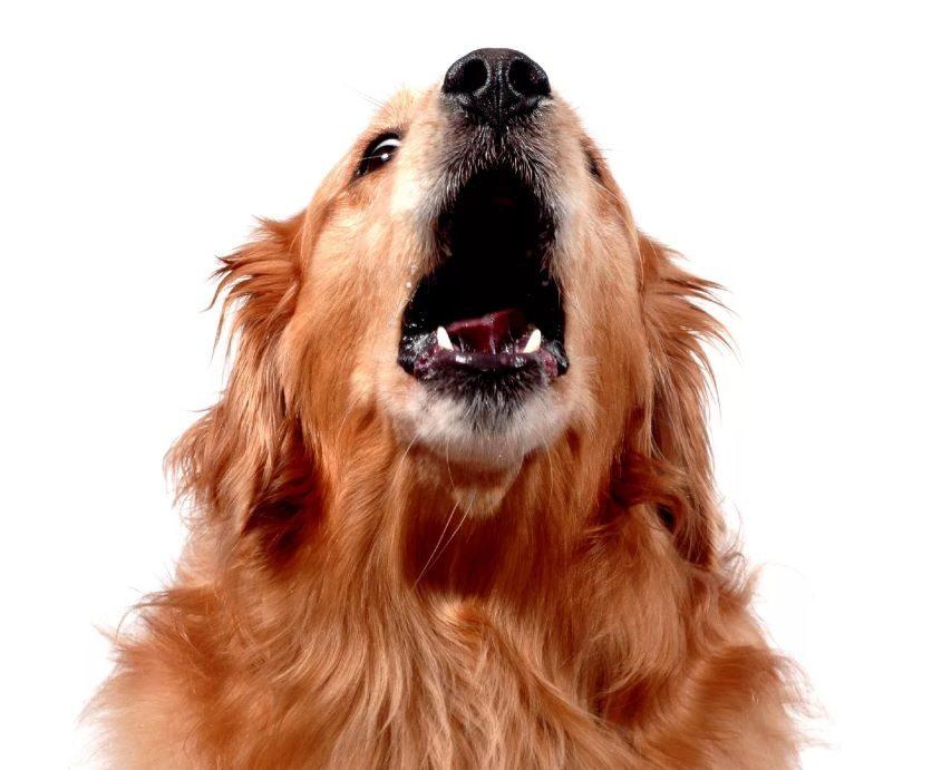 собака лает на улице, что делать