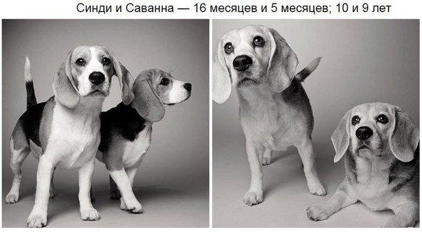 взрослая собака фото