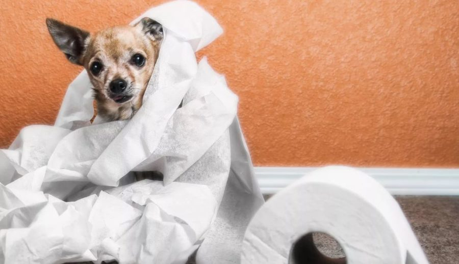 диарея у собаки- лечение в домашних условиях