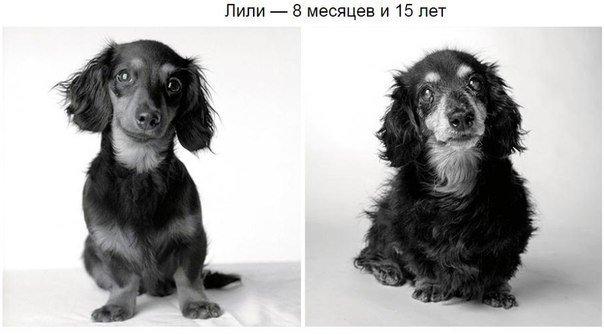 сколько лет собаке