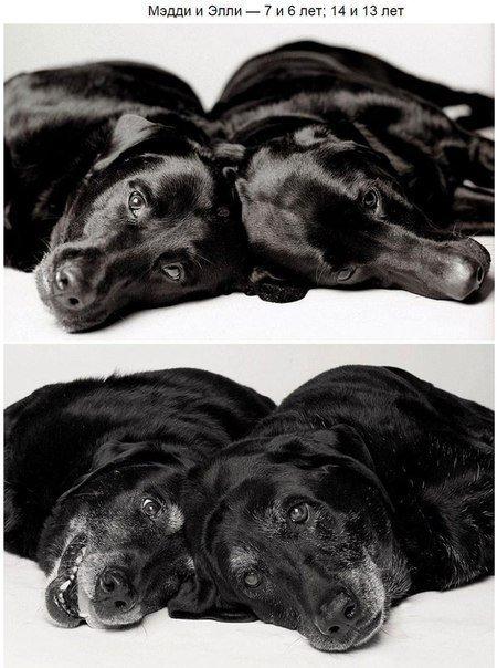 внешность собаки с годами