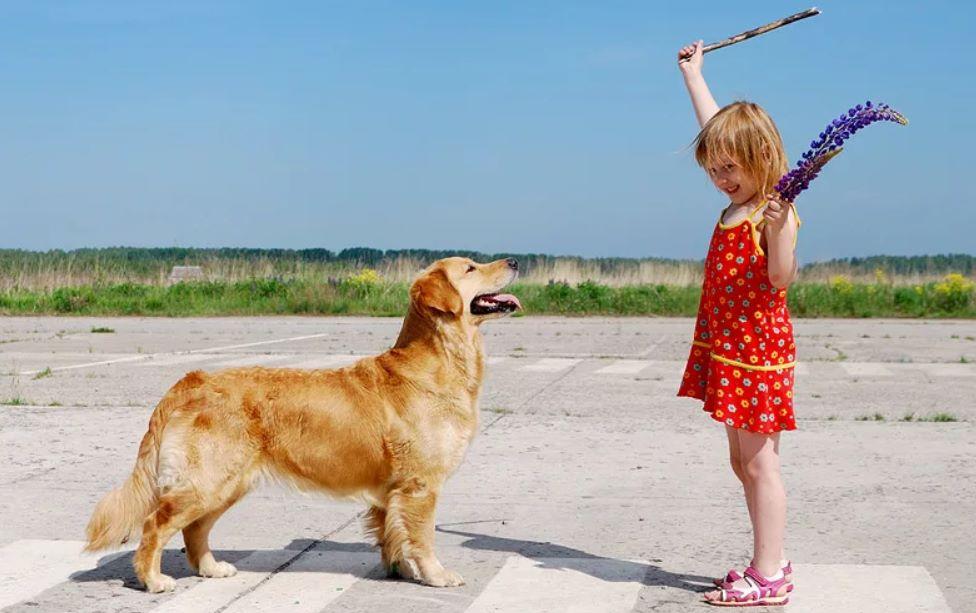 обучение щенка самому