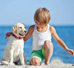 ТОП-10 - подборка лучших пород собак для детей