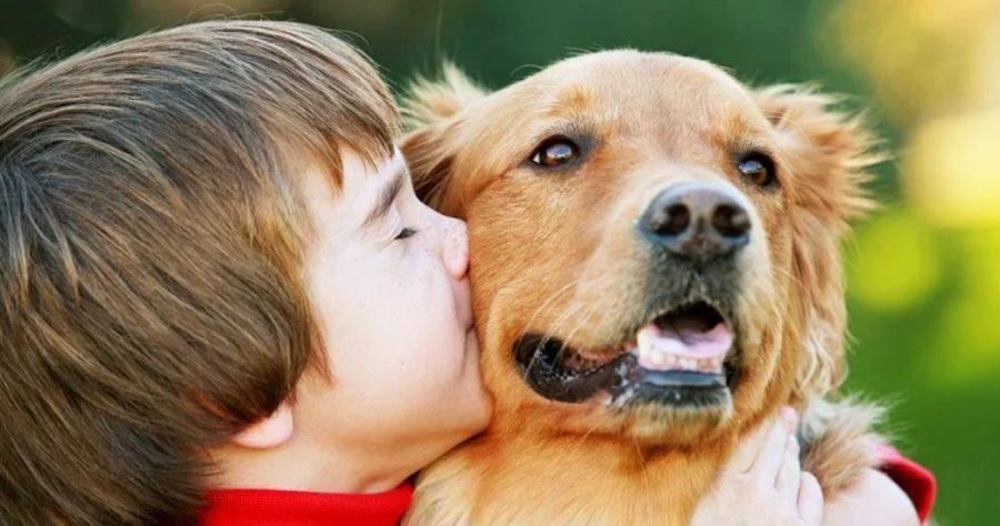 какая собака лучше всего подойдет для ребенка