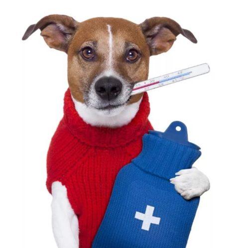 Вакцина для профилактики лептоспироза (Vaccinum ad prophylaxim leptospirosis)- описание вещества, инструкция, применение, противопоказания и формула.