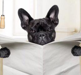Запор у собаки: причины, признаки, лечение