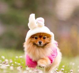 ТОП 15 - миниатюрные породы собак с фото и описанием