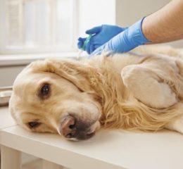 Инфекционное заболевание у собак - Энтерит