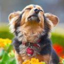 Обзор маленьких пород собак - ТОП 40