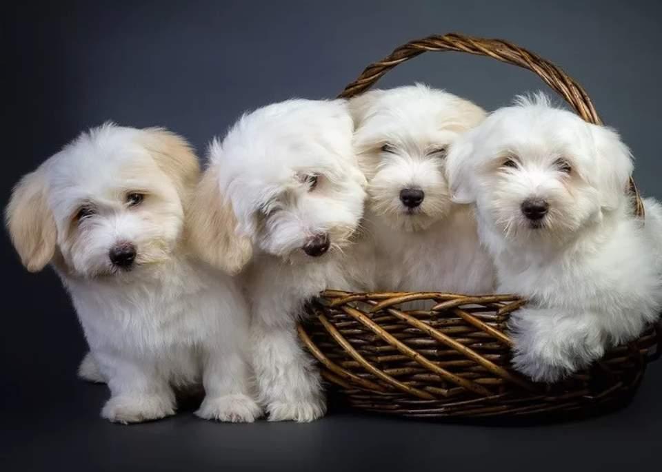щенки собаки