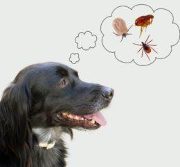 Что делать, если у собаки клещ: способы удаления, первая помощь животному